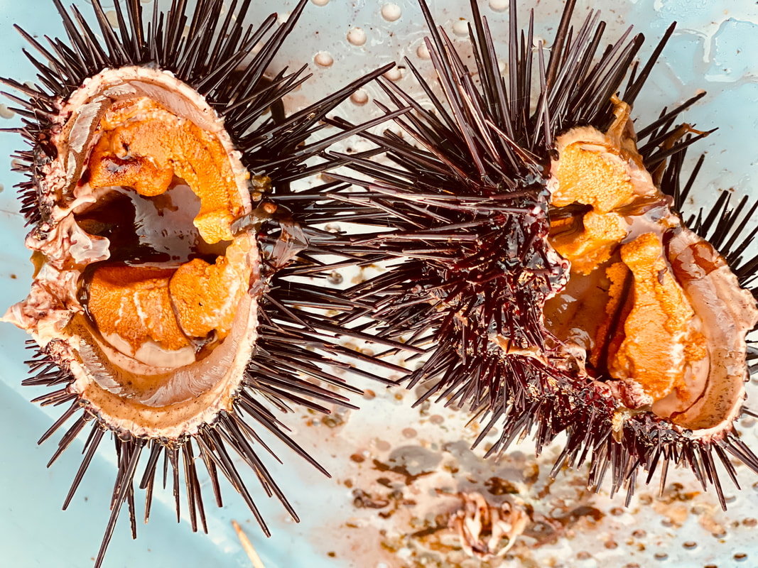 Sea urchin for sale, buy sea urchin, sea urchin near me, where to buy sea urchin near me, live sea urchin for sale, Santa Barbara sea urchin, where can i buy sea urchin, fresh sea urchin near me, uni for sale near me, sea urchin market, sea stephaie fish